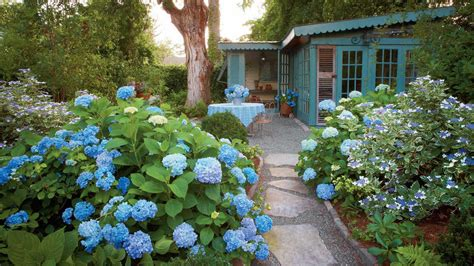 dreamy hydrangea gardens   giving  major