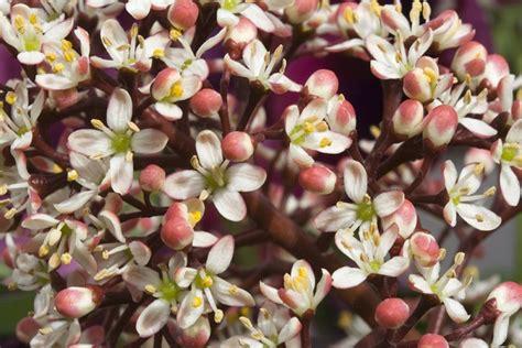 fiori autunnali da giardino 6 piante da giardino autunnale pollicegreen