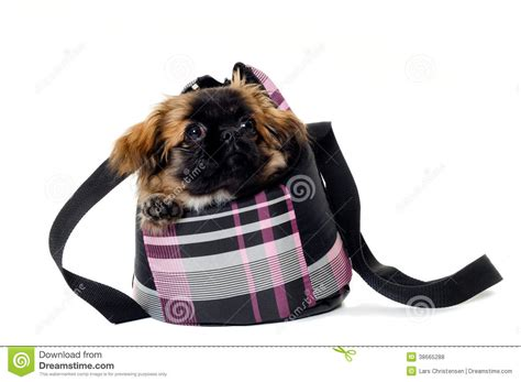 puppy in a purse puppy in bag royalty free stock photos image 38665288
