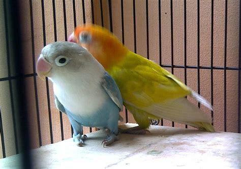 Mini Wallet Dompet Koin Aneka Karakter Dompet Anak Domp Berkualitas ts trishan farm lovebird