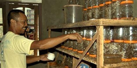 Ternak Cacing Gagal sunarto menekuni ternak semut rangrangbisnis usaha ternak