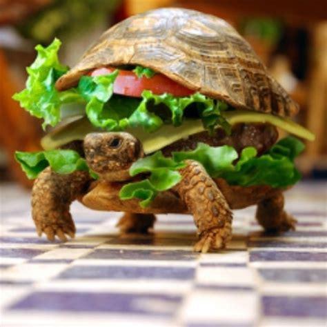 turtle burger keeprecipes  universal recipe box