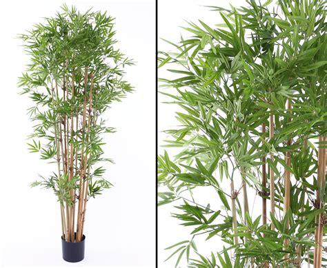Pflanzen G Nstig Kaufen 126 by Bambus Mit 2400 Textilen Bl 228 Ttern G 252 Nstig Kaufen