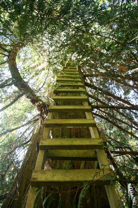 cedar creek treehouse washington cedar creek treehouse tiny house swoon