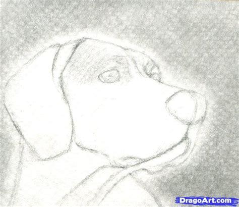 dibujos realistas a lapiz faciles animales dibujo art
