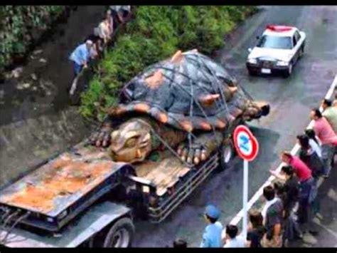 imagenes de tortugas raras la tortuga m 225 s grande del mundo youtube