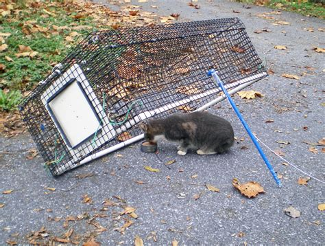 stray cat trap how do i keep stray cats from spraying my house