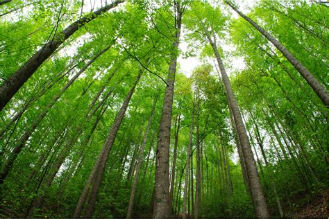 imagenes de bosques verdes bosque verde arboles troncos hojas verdes 164372 vida