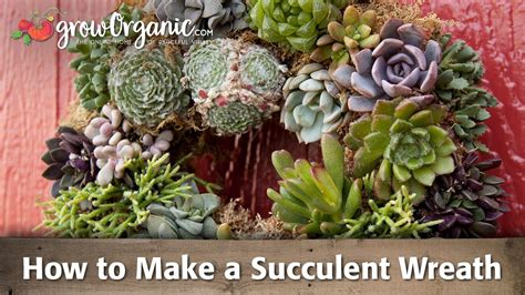 how to make a succulent wreath youtube