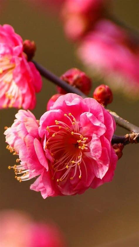sfondi fiore sfondi fiori 44 immagini
