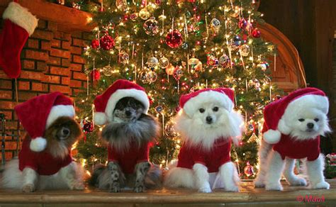 christmas animals pictures   images  facebook tumblr pinterest  twitter