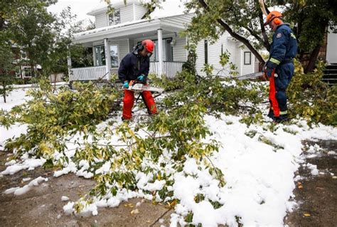 Actually Late Summer Cleaning by Calgary Still Cleaning Up From Late Summer Snowstorm Ctv