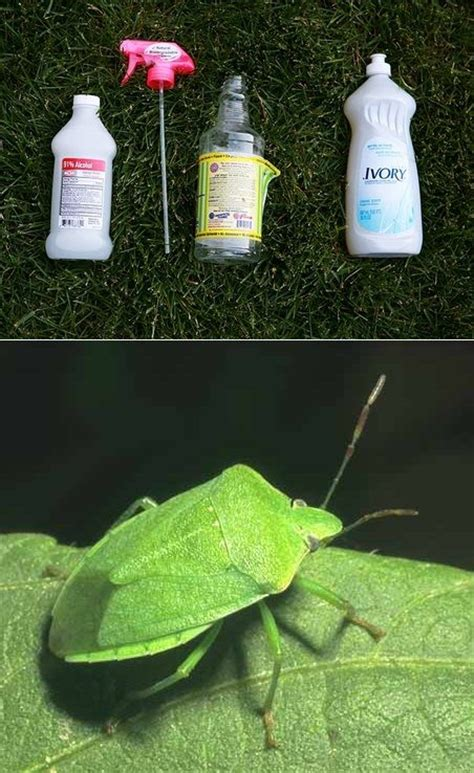 isopropyl alcohol bed bugs isopropyl alcohol bug spray in fact it s the only thing we ve found that kills