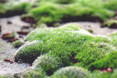 how to prevent and moss in your garden