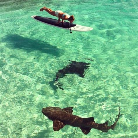 paddle board with mcwilliams paddle board with sharks in highbourne cay bahamas based out