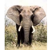 Mother And 10 Year Old Daughter Killed In Elephant Attack  Daily Mail