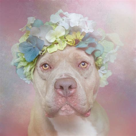 best for pit artist photographs pit bulls in floral crowns to show