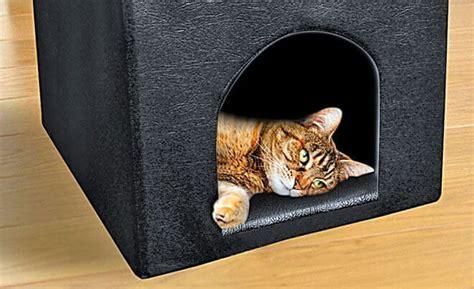 Cuccia Per Gatti Da Esterno Fai Da Te come costruire una cuccia per gatti cuccia per gatti fai