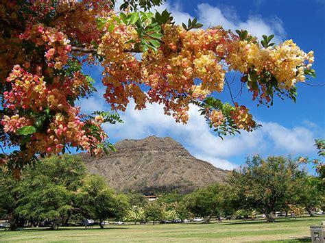 Shower Tree Hawaii by Shower Trees Overlooking Honolulu Hawaii