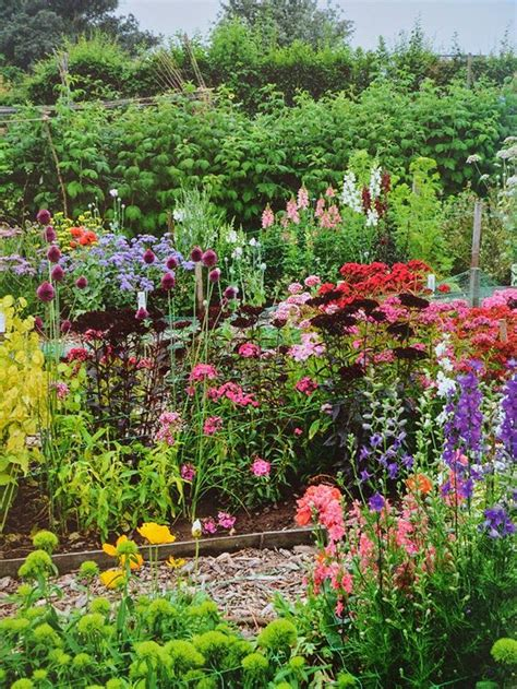 Cut Flower Garden The Cut Flower Patch A Guide To Growing Your Own Beautiful Cut Flowers Throughout The Year
