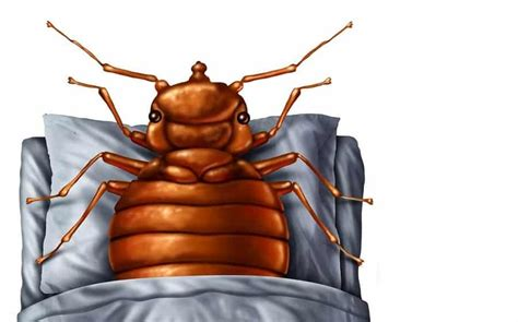 how to make bed bug bites stop itching bed bug bites itch 15 remedies found in your house home