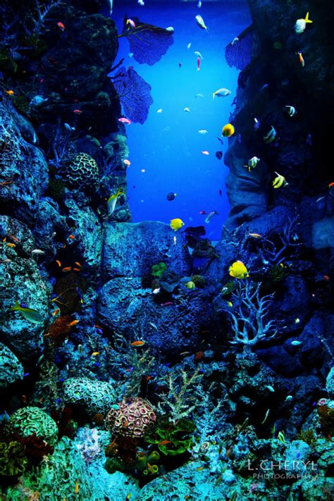 underwater wallpaper tumblr underwater photography on tumblr