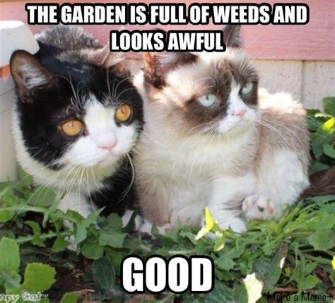 Tardar Sauce Meme - 1448 best tardar sauce grumpy cat images on pinterest