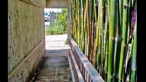 tende di bambu per esterno canne di bambu per tettoie