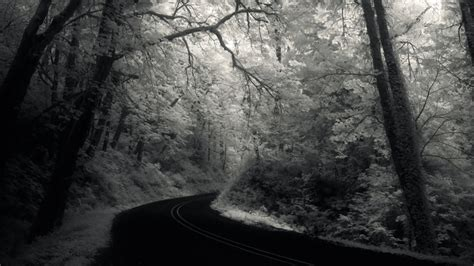 grayscale wallpaper grayscale roads nature forests hd desktop wallpaper