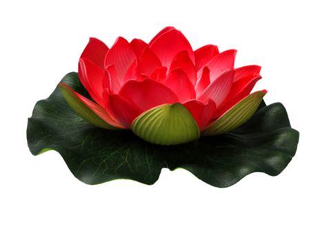 lotus flower images free downloads lotus flower png images free