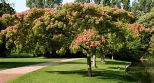Superbe Quel Arbre Dans Mon Jardin #8: Arbre-jardin-ombre.gif