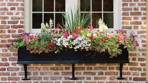 southern living container gardening southern living container gardening ideas photograph conta