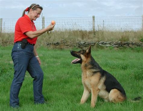 how to house train a dog in 7 days basic things in training your dog all about dogs