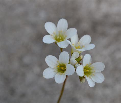 printable beautiful flowers beautiful flowers wallpaper images download free