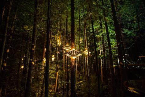 Redwood Lighting redwoods nightlights redwoods treewalk rotorua