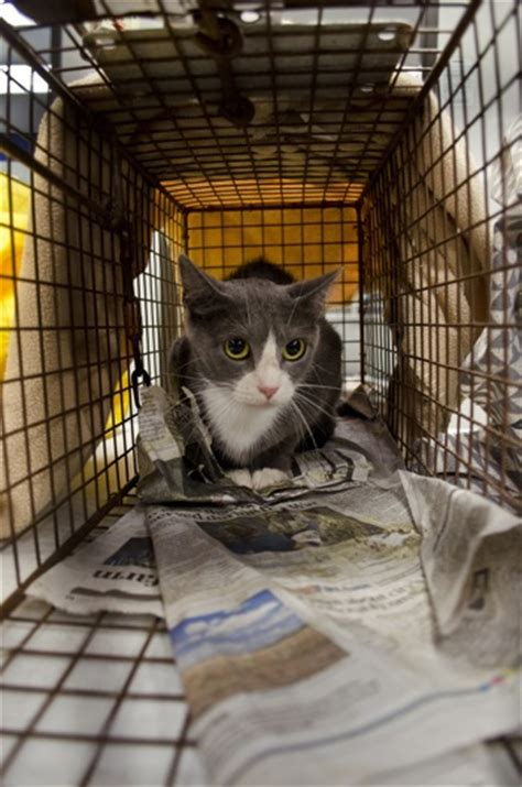 stray cat trap cat trap fever austin humane society needs help taming