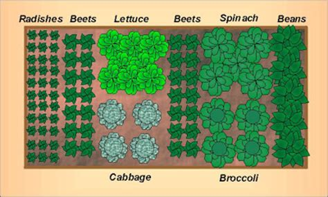 fall garden plan fall vegetable garden layout for a 4 x8 raised bed