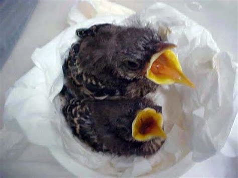 10 000 birds do not feed baby birds milk or bread
