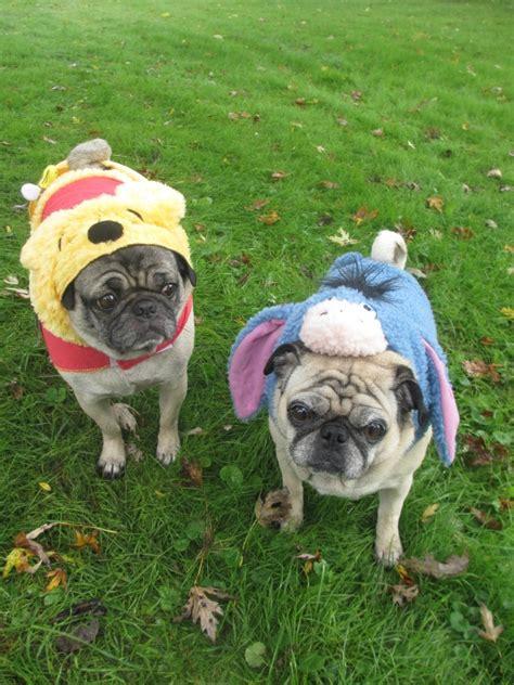 pug petsmart the pugs costumes from petsmart emily reviews