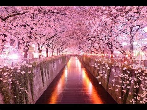the prettiest tree in the world top 10 most beautiful tree tunnels in the world