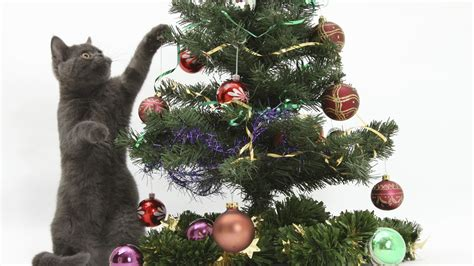 cat on christmas tree wallpaper 1043590