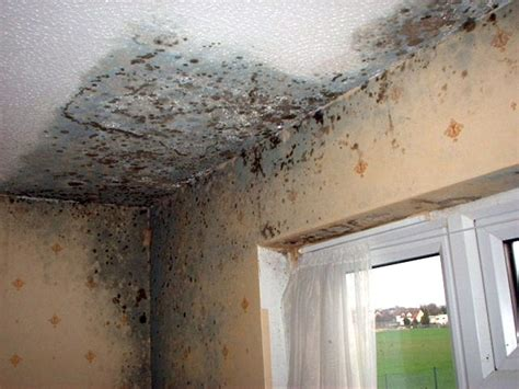 what causes mould on bedroom walls muffa sui muri tutti i rimedi idee green