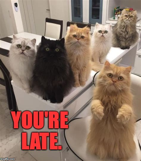 Office Cat Meme - office cats imgflip