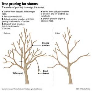 Tree Pruning Landscapes Trees And Yard Www K95tulsa