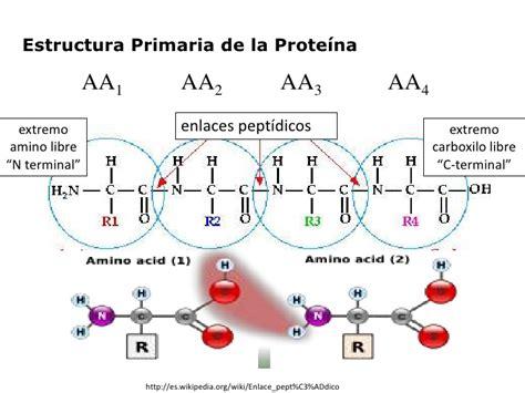 proteinas y su estructura amino 225 cidos y estructura primaria de las prote 237 nas