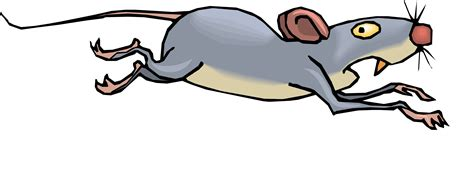 clipart mouse rodent clipart dead rat pencil and in color rodent