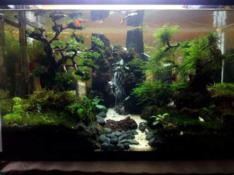 aquascape design waterfall 186 best aquascape images on pinterest fish tanks fish