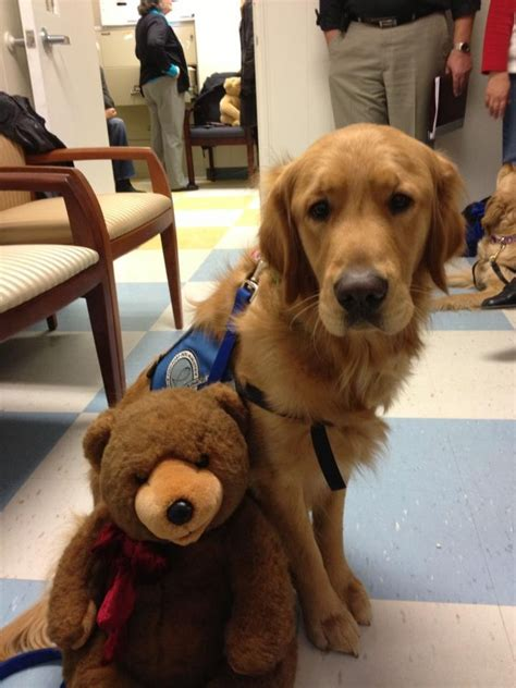 lcc comfort dogs 26 best images about k 9 comfort dogs of lutheran church