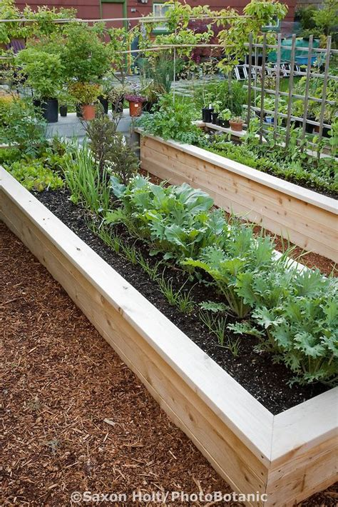 Wood For Raised Vegetable Garden - 1000 ideas about cedar raised garden beds on pinterest raised garden beds raised gardens and
