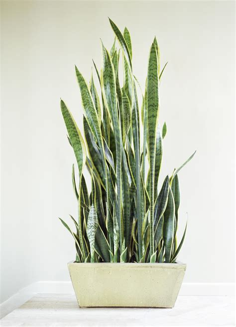 low light indoor plants in pretty easy to grow houseplants 10 houseplants that can survive even the darkest corner